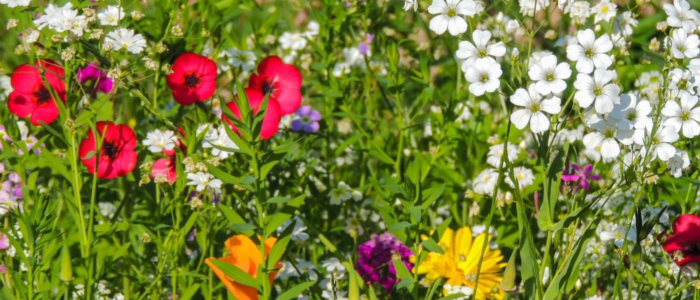 Ausbildung Gartentherapie Hamburg