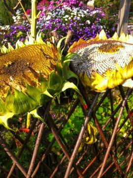 Ausbildung Gartentherapie Unterkunft