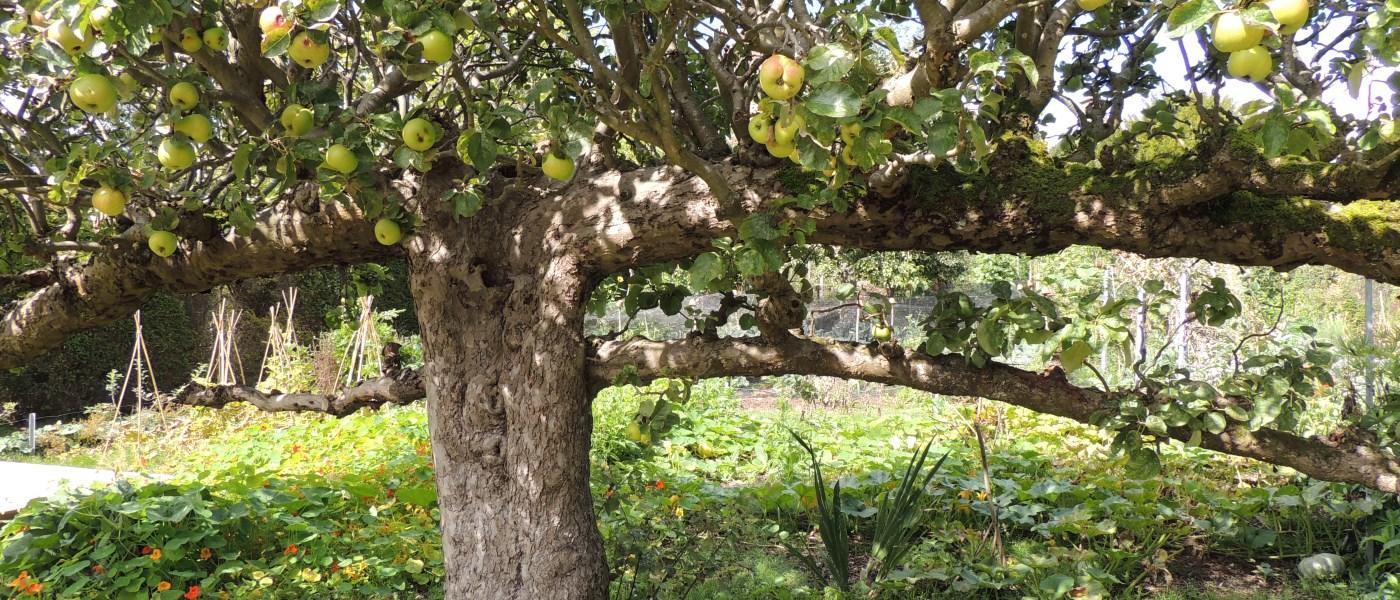 Ausbildung Gartentherapie Wangeliner Garten